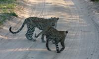 Kruger National Park_Courtesy James Walsh (23) South Africa